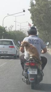 Mersin'de bir kopegin sahibinin arkasinda yaptigi motosiklet yolculugu vatandaslari hayret ettirdi.